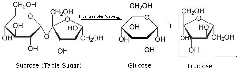 Reaksi Gula Sains Kimia