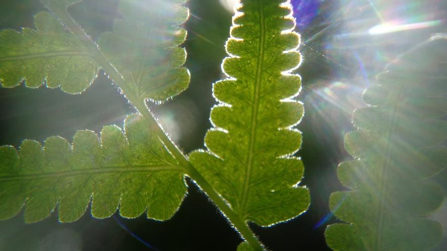 Ilmu Kimia Di Balik fotosintesis