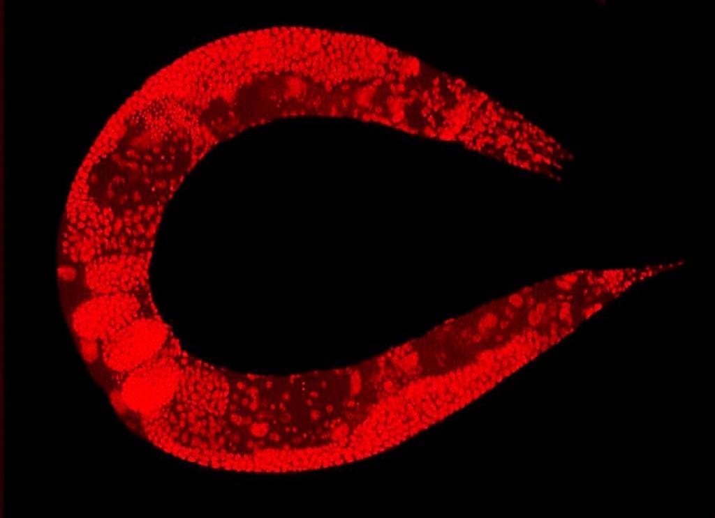 Fungsi, Efek, dan Bahaya Nitrit Oksida Dalam Tubuh