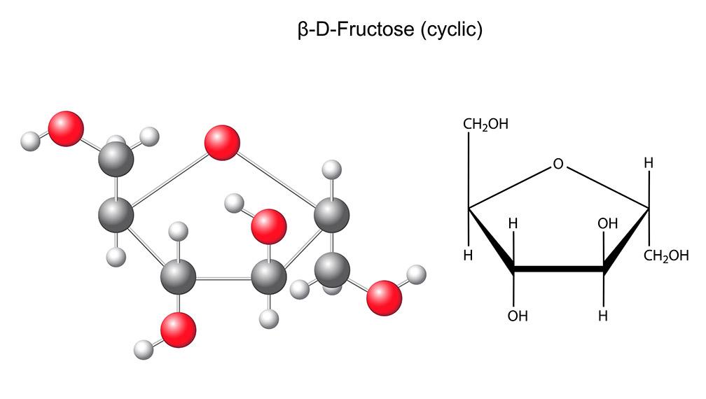 Gula, Glukosa dan Fruktosa