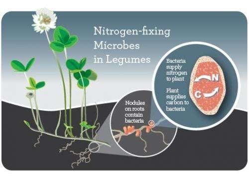 Peran dan Mekanisme Kerja Nitrogen Pada Pertumbuhan Tanaman