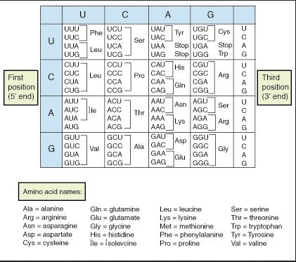 Pengertian, Pembuatan dan Pemecahan Protein